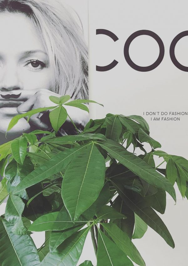 Desenio: trendy posters en prints