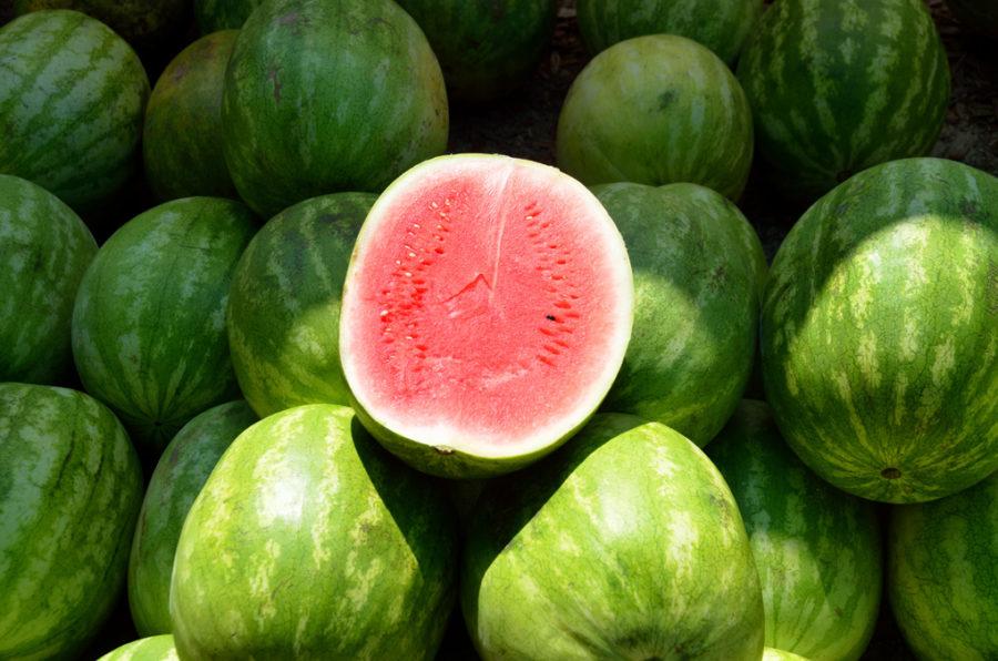 blogs followfitgirls followfashion watermeloen