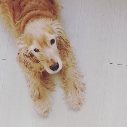 hondenkussens sasha