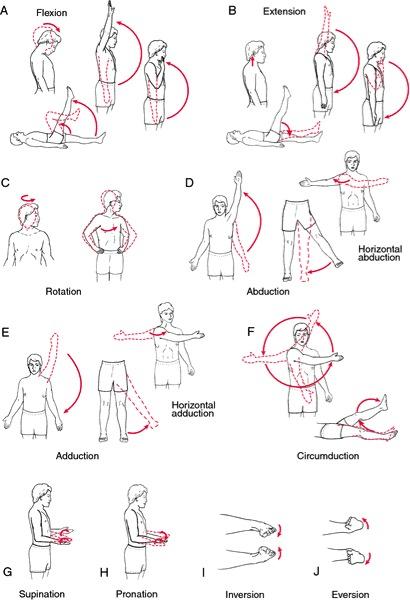 range of motion voorbeelden