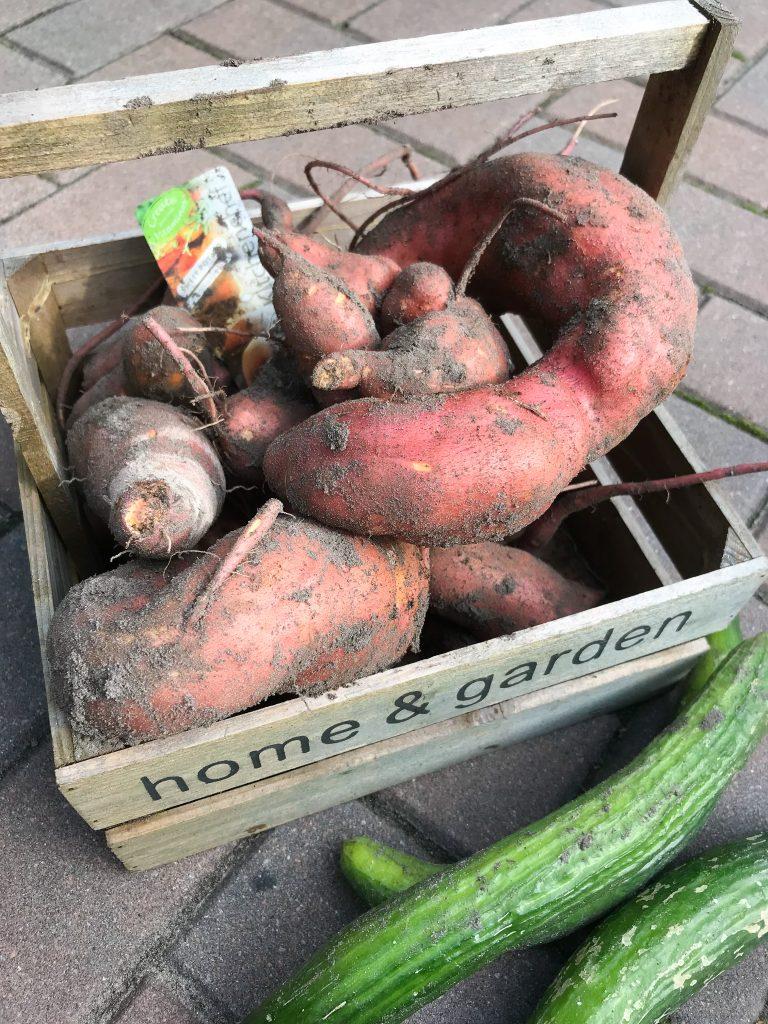 my week in pictures zoete aardappel