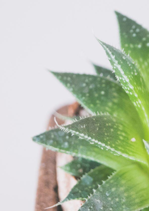 Deze kamerplanten hebben een positief effect op je humeur